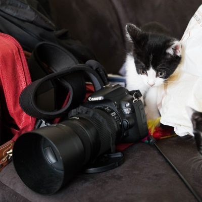chaton-photographe-backstage-5673