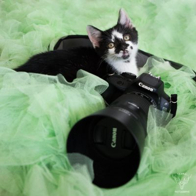 chaton-photographe-backstage-5676