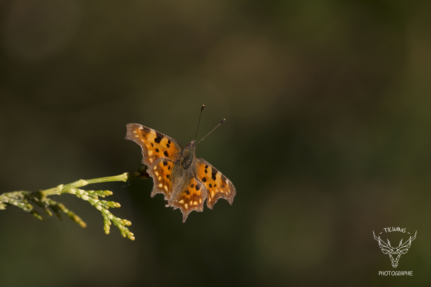 bokeh papillon tutoriel